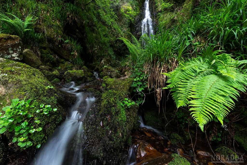 Cascada de Belaustegi, rodeada de helechos en primavera