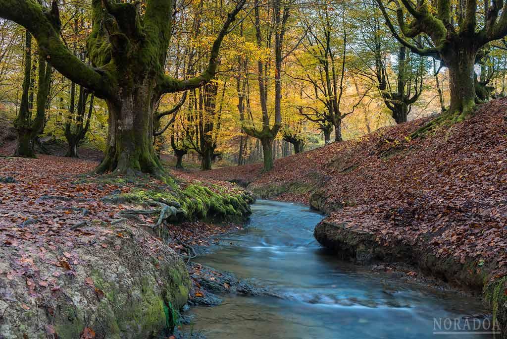 Un pequeño arroyo recorre el hayedo de Otzarreta