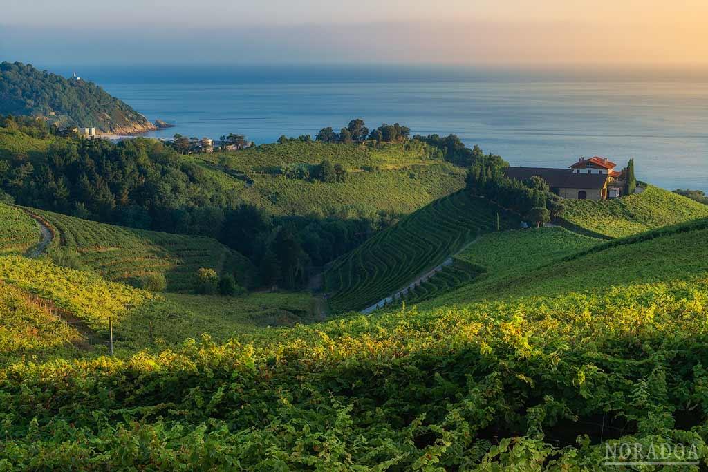 Amanece en Getaria con sus viñedos de txakoli en primer plano